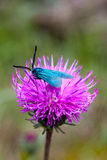 Closeup of a butterfly. Closeup of a beautiful little butterfly on a flower Stock Photos