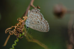 Closeup butterfly.big butterfly sitting on green leaves, beautif Stock Photo