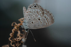 Closeup butterfly.big butterfly sitting on green leaves, beautif Stock Photography