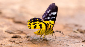 Closeup butterfly. Stock Photo