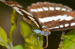 Closeup of a butterfly eyes perched on leaf Stock Photo
