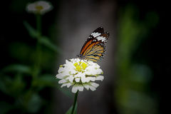 Closeup butterfly. On the flower royalty free stock photography