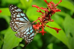 Closeup butterfly on flower. Beautiful butterfly royalty free stock photography