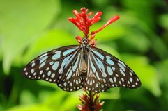 Closeup butterfly on flower. Beautiful butterfly royalty free stock images