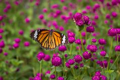 Closeup butterfly on flower blurry background. In garden or in nature Stock Photo