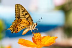 Closeup butterfly on flower Royalty Free Stock Photo