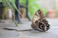 Closeup butterfly on flower Royalty Free Stock Photography