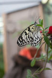 Closeup butterfly on flower. Pn summer day Stock Image