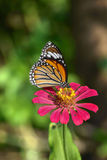 Closeup butterfly on flower Stock Photography