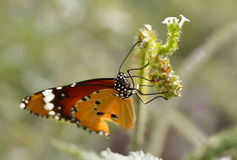Closeup butterfly on flower royalty free stock images