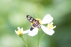 Closeup butterfly on flower. Butterfly  looking for nectar on a daisy flower Stock Photography