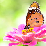 Closeup butterfly on flower Stock Images