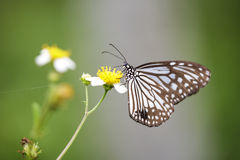 Closeup butterfly on flower Royalty Free Stock Photos
