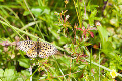Closeup butterfly on flower. Pn summer day Royalty Free Stock Image