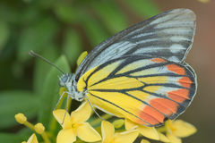 Closeup of butterfly Royalty Free Stock Photos