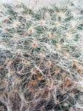 Closeup of cactus plant. Closeup shot of cactus plant spikes Stock Images