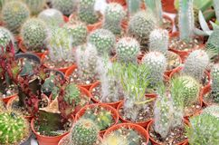 Closeup of cactus and succulent plants royalty free stock image