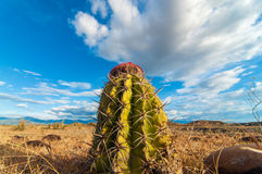Free Closeup Cactus View Stock Photos - 29323803