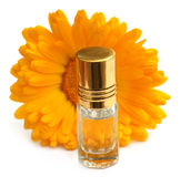 Closeup of calendula with essence bottle Royalty Free Stock Image