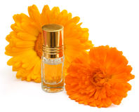 Closeup of calendula with essence bottle Royalty Free Stock Photos