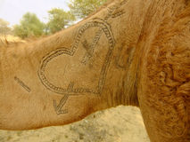 Closeup of camel hair pattern Stock Photography
