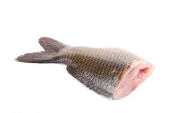 Closeup of carp fish tail. Royalty Free Stock Image