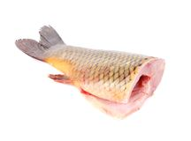 Closeup of carp fish tail. Royalty Free Stock Photos