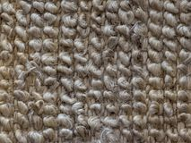 Carpet fibres close-up. Beige abstract background. Closeup of a carpet texture. Photo of a beige carpet for background, patterns, design elements or texture stock photography