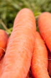 Closeup of carrots with green Stock Photo