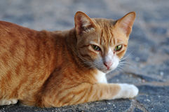 Closeup of a cat Royalty Free Stock Photo