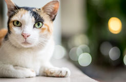Closeup cat, bokeh background Stock Photo