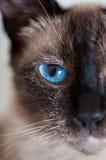 Closeup of cat Stock Images