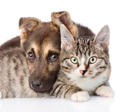 Closeup cat and dog together on white background Stock Images