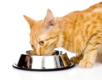 Closeup cat eating food. isolated on white background Stock Image