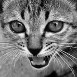 Closeup cat face Royalty Free Stock Image