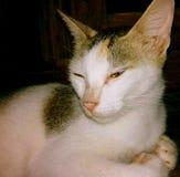 Cat face. Closeup cat face Stock Photo