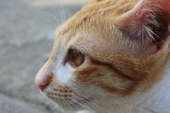 Closeup cat face Stock Images