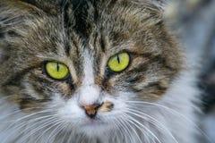 Closeup of a cat Stock Image