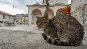 Closeup of cat at the historic centre of Sarajevo. Bosnia and Herzegovina. Selective focus royalty free stock image