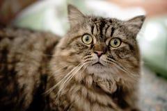 Closeup cat looking at camera Stock Photo