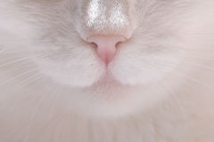 Closeup cat nose and mustache Royalty Free Stock Photos