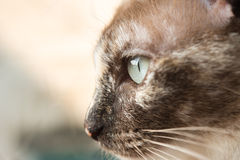 Closeup cat portrait eye cat looking outside nature background. Stock Photo