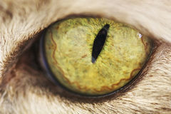 Closeup of a cats eye Stock Photography