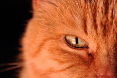 Closeup of a cat's green eye Stock Photos