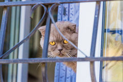 Closeup of a cat sitting behind iron fence. Waiting royalty free stock image