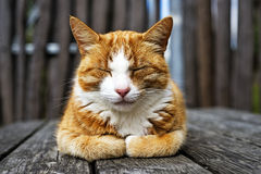 Closeup Cat Stock Photos