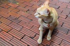 Closeup Cat waiting for something Stock Image