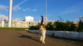 Closeup Cat Walks along Road Meows against Powerful Refinery stock footage