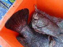 Catch of the day and cleaned and fresh fishes ready to cook. royalty free stock photos