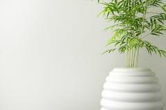 Closeup of ceramic tree pot and wall interior Royalty Free Stock Image